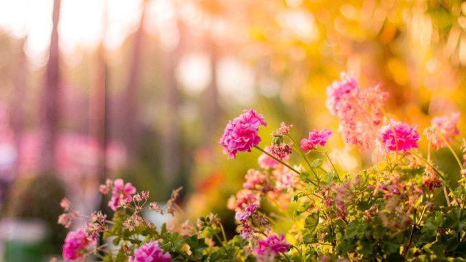 antifurto per giardino